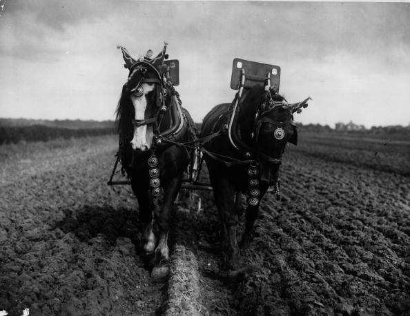 Working Animal「Plough Horses」:写真・画像(4)[壁紙.com]
