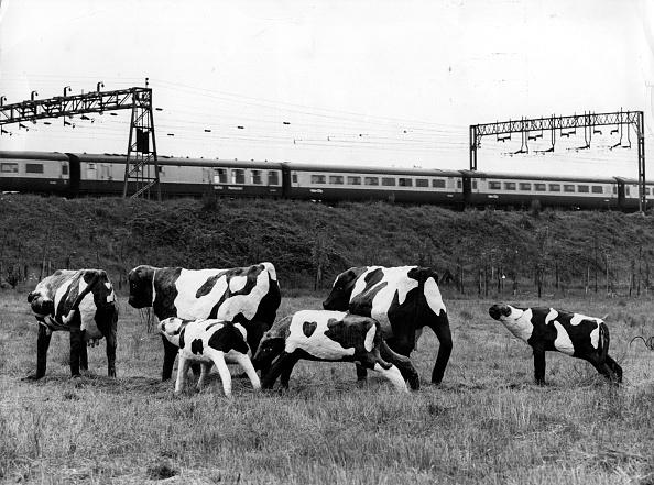 Electric Train「Concrete Cows」:写真・画像(6)[壁紙.com]