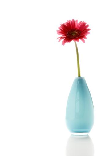 Single Flower「Flower in a pot on white background」:スマホ壁紙(17)