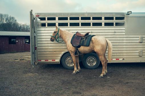 Horse「white horse standing next to trailer.」:スマホ壁紙(12)