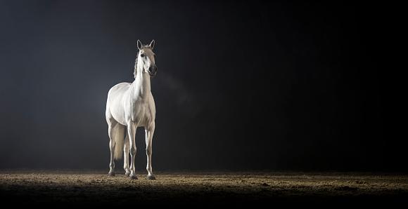 White Color「ホワイト ホールに乗って馬立って」:スマホ壁紙(19)