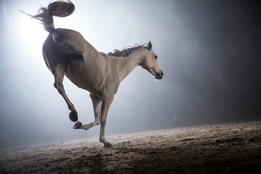 Horse「White horse bucking」:スマホ壁紙(11)