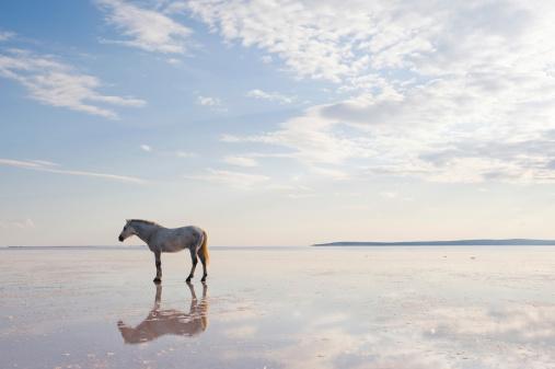馬「ホワイトホース」:スマホ壁紙(10)