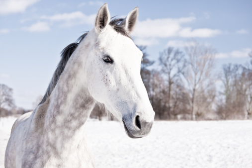 Horse「White Horse」:スマホ壁紙(9)