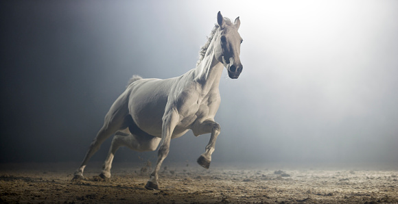 Horse「White horse running in riding hall at night」:スマホ壁紙(5)