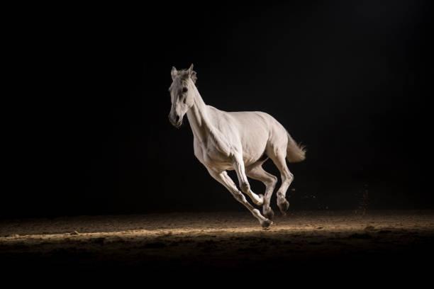 White horse running:スマホ壁紙(壁紙.com)