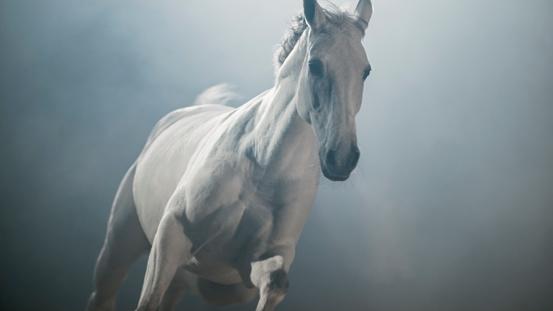 Horse「White horse running」:スマホ壁紙(11)