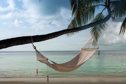 Palm Tree「Hammock hanging on palm tree at beach」:スマホ壁紙(18)