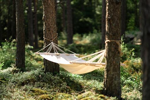 Hammock「Hammock hanging in a forest」:スマホ壁紙(0)