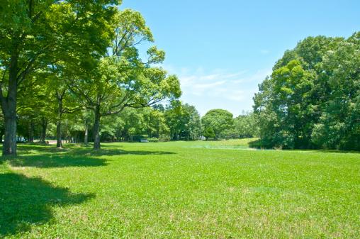 Grass「Trees and grassland」:スマホ壁紙(17)