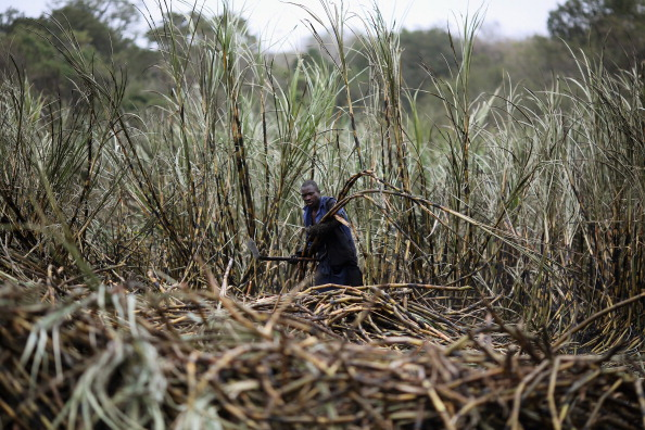 Land「Workers Harvest Sugar Cane」:写真・画像(10)[壁紙.com]