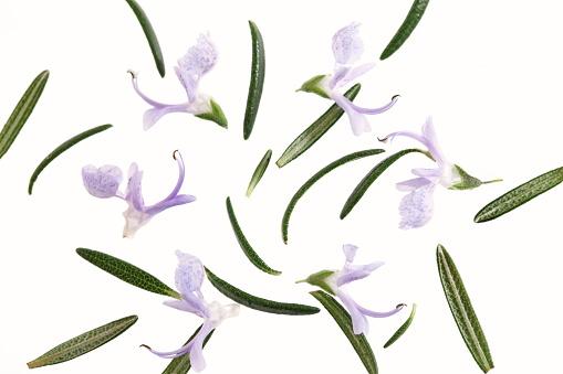 Rosemary「Rosemary flowers and leaves」:スマホ壁紙(1)