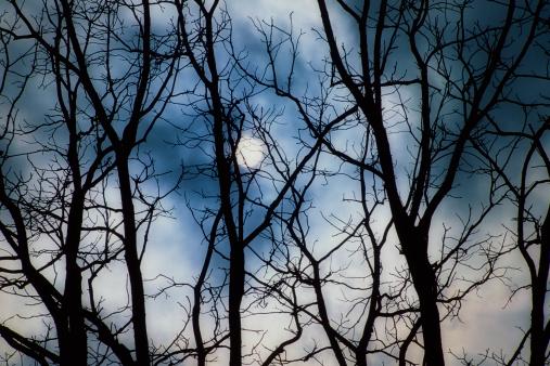 月「Full moon through silhouette of bare tree branches」:スマホ壁紙(6)