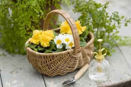 趣味・暮らし「Gardening Goods」:スマホ壁紙(18)