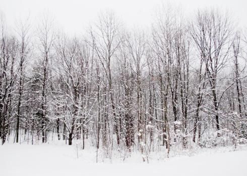 静かな情景「wintry details of New England」:スマホ壁紙(10)