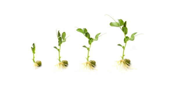 Planting「Growing」:スマホ壁紙(1)