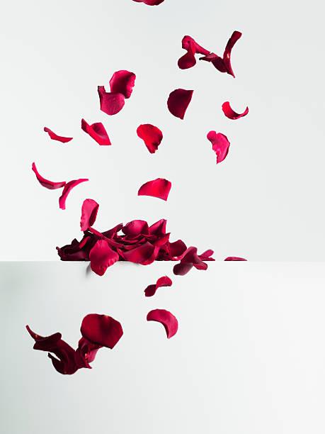 Red rose petals falling:スマホ壁紙(壁紙.com)