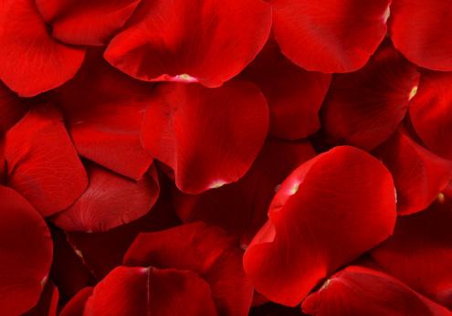 バレンタイン「赤いバラの花びら」:スマホ壁紙(1)