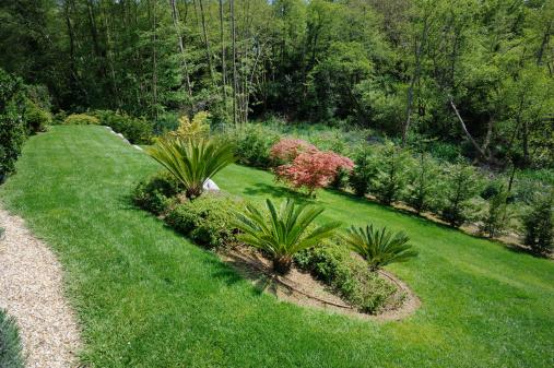 Japanese Maple「landscaped garden, slope, plant, palm, Japanese ma」:スマホ壁紙(16)