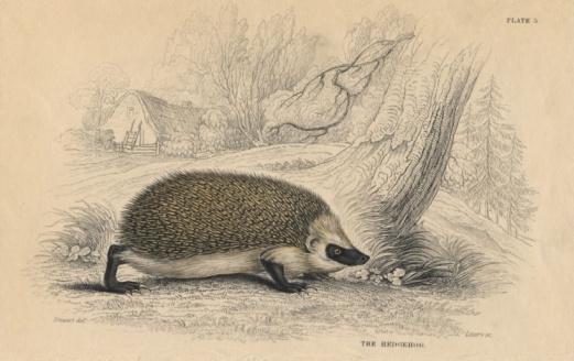 ハリネズミ「Hedgehog in rural habitat」:スマホ壁紙(3)