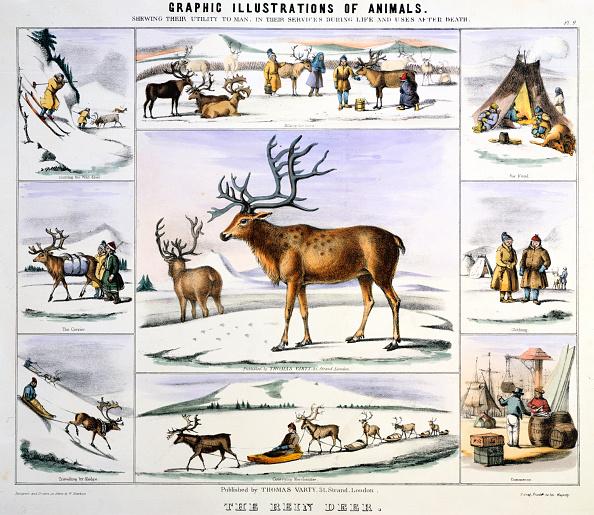 Reindeer Sledding「'The Rein Deer', c1850. Artist: Benjamin Waterhouse Hawkins」:写真・画像(9)[壁紙.com]