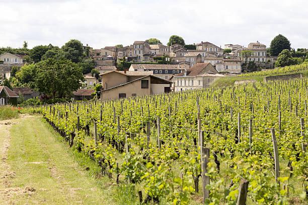 Famous vinyards of Saint-Émillion:スマホ壁紙(壁紙.com)