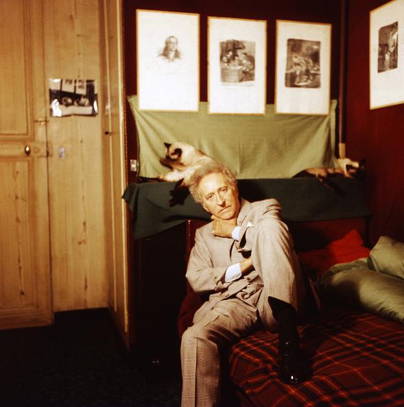 Purebred Cat「Jean Cocteau」:写真・画像(10)[壁紙.com]