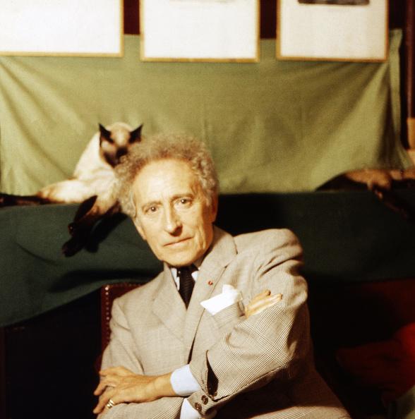 Purebred Cat「Jean Cocteau」:写真・画像(1)[壁紙.com]