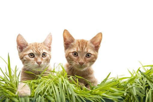 子猫「2 人の兄弟」:スマホ壁紙(14)
