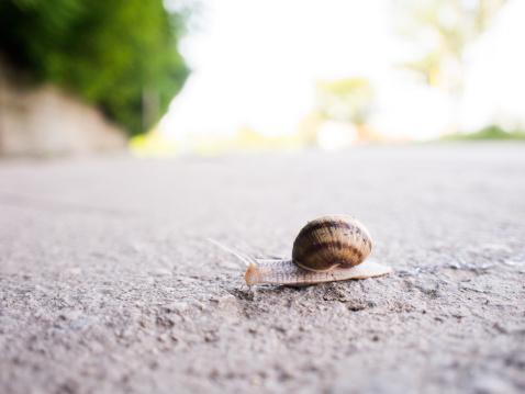 snails「Snail crossing the street」:スマホ壁紙(8)