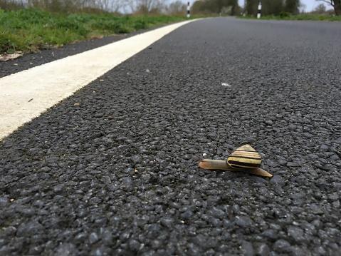 カタツムリ「Snail Crossing a Tarmac Road」:スマホ壁紙(18)