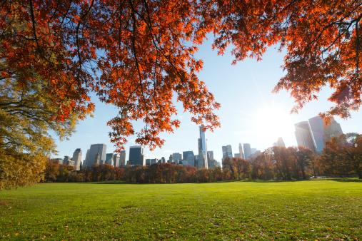 紅葉「Manhattan skyscrapers behind autumn color leaves」:スマホ壁紙(1)