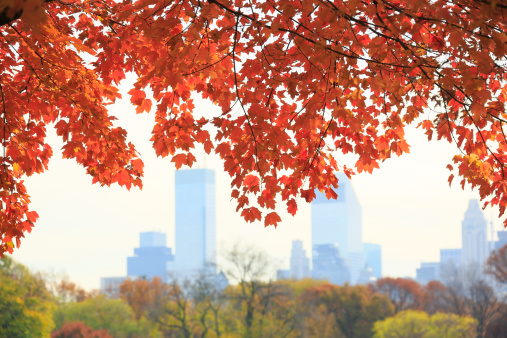 Focus On Foreground「Manhattan skyscraper behind autumn color leaves.」:スマホ壁紙(13)