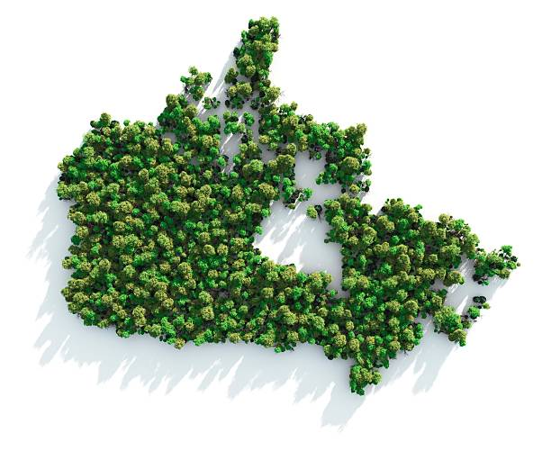 Map of Canada formed by trees on white background:スマホ壁紙(壁紙.com)