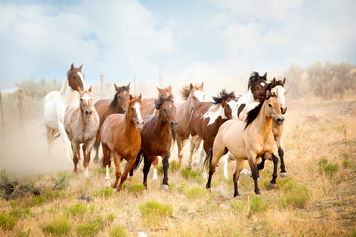Horse「Majestic Herd Of Wild Horses Running In The Desert.  Freedom Bound Away From All That Would Do Them Harm..」:スマホ壁紙(0)