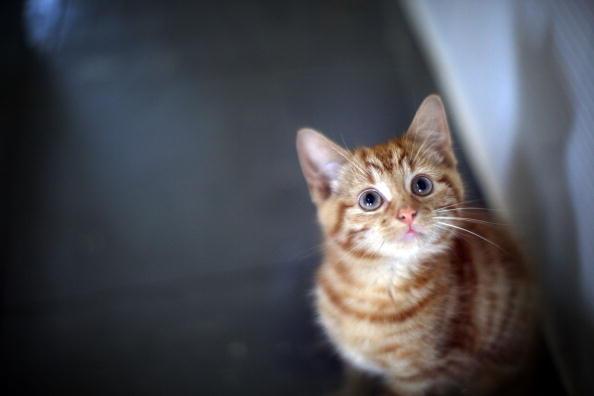 Kitten「Animal Sanctuary Needs £200,000 To Avoid Closure」:写真・画像(7)[壁紙.com]