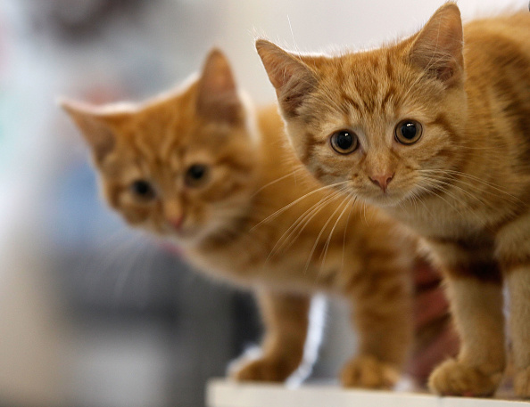 Kitten「Animal Sanctuary Needs £200,000 To Avoid Closure」:写真・画像(0)[壁紙.com]