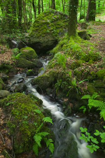 Frond「A stream flowing through oak woodland nr Fingle Bridge, Drewsteignton, Dartmoor National Park, Devon, Great Britain.」:スマホ壁紙(8)