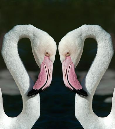 Multiple Exposure「Flamingo Mirror Image」:スマホ壁紙(6)