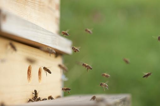 Approaching「Bees approaching beehive」:スマホ壁紙(2)