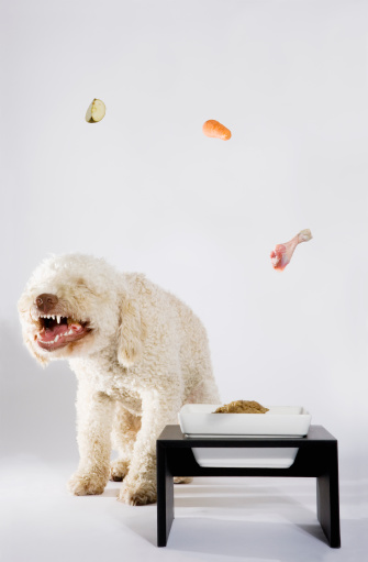 Furious「Food floating above a Portuguese Waterdog」:スマホ壁紙(0)