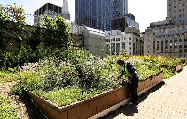 Rooftop「Green Rooftop Graces Chicago's City Hall」:写真・画像(16)[壁紙.com]