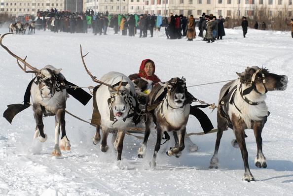 Reindeer Sledding「The Nenets - nomad tribes from Siberia」:写真・画像(1)[壁紙.com]
