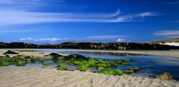 Algae「Beach and seaweed, Cliad beach, Island of Col, Inner Hebrides, Scotland」:スマホ壁紙(10)