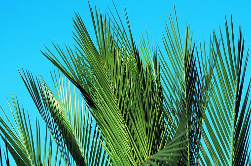 Frond「Exotic plants」:スマホ壁紙(17)