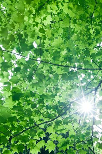 Color Image「葉、太陽の光」:スマホ壁紙(11)