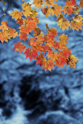 Nikko City「leaves with river behind」:スマホ壁紙(2)
