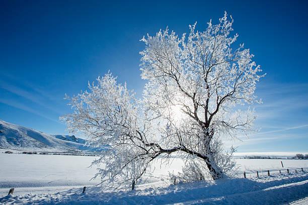 Snow covered tree in rural landscape:スマホ壁紙(壁紙.com)