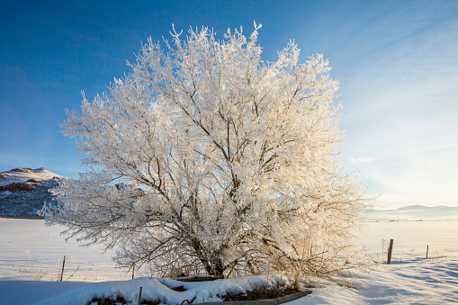 The Nature Conservancy「Snow covered tree in rural landscape」:スマホ壁紙(18)