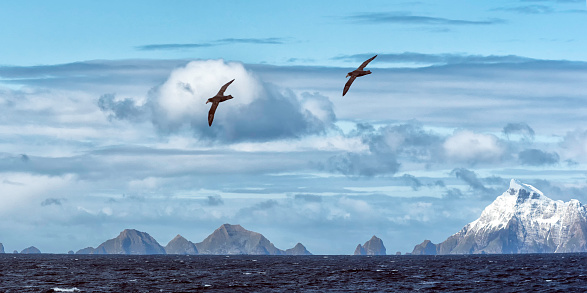 Albatross「Snow covered mountains and albatrosses,  South Georgia Island」:スマホ壁紙(5)